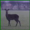 Hockham Deer Management Group